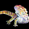 Sherry Shipley - Bearded Dragon