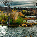 Kimberleigh Ladd - Beautiful Autumn Marsh