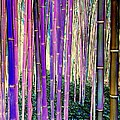 Ed Weidman - Beautiful Bamboo