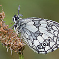 Mark Monckton - Beautiful Marble White...