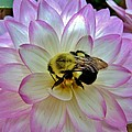 Hominy Valley Photography - Bee