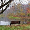MTBobbins Photography - Bench View