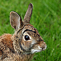 Debbie Oppermann - Big Eared Brown Eyed...