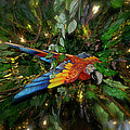 Thomas Woolworth - Big Glider Macaw Digital...