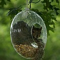 Bonita Hensley - Bird Feeder?