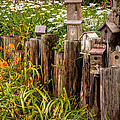 Gene Sherrill - Birdhouses Beside a...