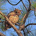 HH Photography - Birds - Great Horned Owl