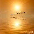 Wim Lanclus - Birds into Sunset