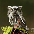 Inspired Nature Photography By Shelley Myke - Birds of Prey...