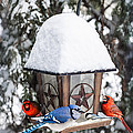 Elena Elisseeva - Birds on bird feeder in...