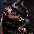 Daliana Pacuraru - Black Cat drawing...