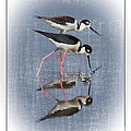 Tessa Fairey - Black-necked Stilt framed