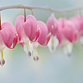 Jennie Marie Schell - Bleeding Heart Pink...