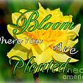 Kathy  White - Bloom Where You Are...