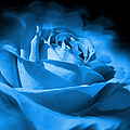 Jennie Marie Schell - Blue and Black Rose...