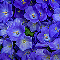 Jenny Rainbow - Blue Bells Carpet....