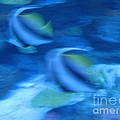 Susanne Baumann - Blue fish2