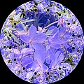 Nancy Pauling - Blue Geranium Circle