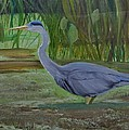 Donald Schrier - Blue Heron Wades in Swamp