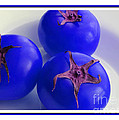 Barbara Griffin - Blue Hothouse Tomatoes -...