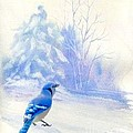 Janette Boyd - Blue Jay in Winter