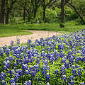 Valerie Loop - Bluebonnet Path 2