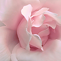 Jennie Marie Schell - Blushing Pink Rose Flower