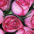 Photographic Art and Design by Dora Sofia Caputo - Bouquet of Pink Roses