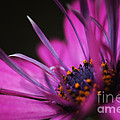 HJBH Photography - Bright colored purple...