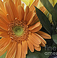 Arlene Carmel - Bright Orange Gerbera