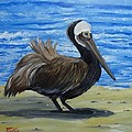 Donald Schrier - Brown Pelican on Datona...