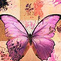 Variance Collections - Butterfly Art - sr51a