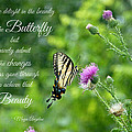 Soul Full Sanctuary Photography By Tania Richley - Butterfly Beauty