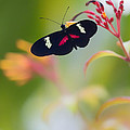 Bill Tiepelman - Butterfly In A Vibrant...