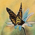 Michelle Miron - Butterfly on Flower