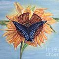 Kimberlee  Baxter - Butterfly Sunday Cropped