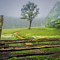 Debra and Dave Vanderlaan - Cades Cove Misty Tree