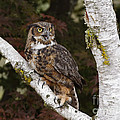 Inspired Nature Photography By Shelley Myke - Call of the Great Horned...