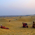 Sue Jacobi Photography - Camels Kneeling Sand...