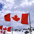 Charline Xia - Canadian Flags At...