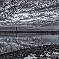 Tom Singleton - Cape May Harbor BW