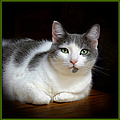 Constance Lowery - Cat With Beautiful Green...