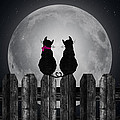 Maria Dryfhout - Cats in the Moonlight