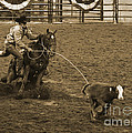 Janice Rae Pariza - Cattle Roping in Colorado