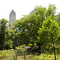 Louis Scotti - Central Park - NYC