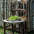 Ron Roberts - Chair planter