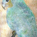 Anne-Elizabeth Whiteway - Cheerful Blue Parrot