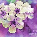 Debbie Portwood - Apple Blossoms in Purple...
