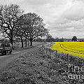 Pete Edmunds - Cheshire - Rapeseed...