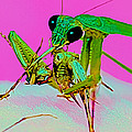 Leslie Crotty - Chinese Praying Mantis...